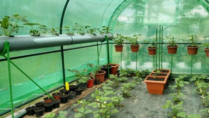 Gør din have hyggeligere – byg et drivhus