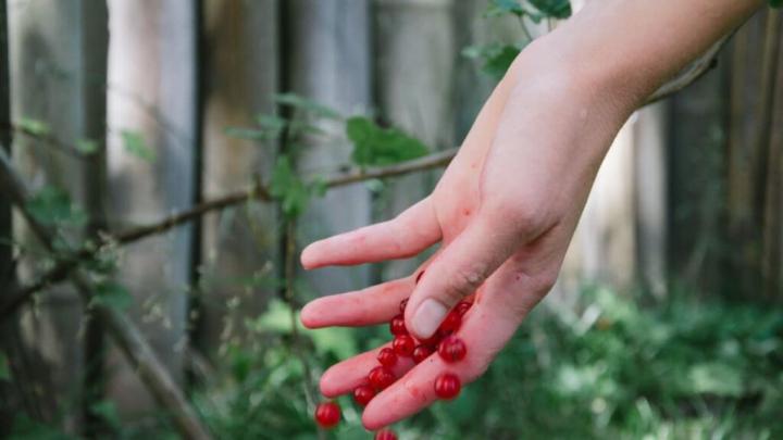 Fyld din have op med lækre bær